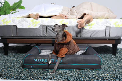 Askona Dog Bed
